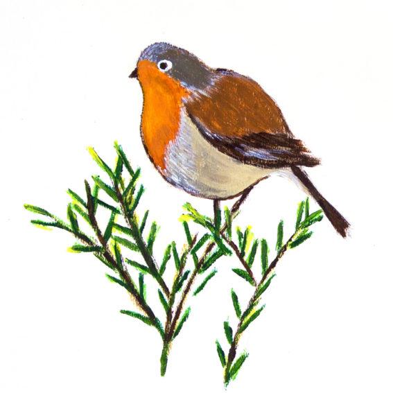 illustration d'un rouge-gorge sur une branche